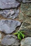 Μικροί εγκαταστάσεις και βράχος Στοκ φωτογραφία με δικαίωμα ελεύθερης χρήσης