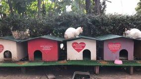 Μικροί ξύλινοι χρωματισμένοι θάλαμοι Antalya οδών καταφυγίων γατών απόθεμα βίντεο