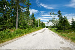 Μικροί δρόμος και δάσος Στοκ Εικόνες