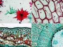 Μικρογράφημα ξύλου της Apple, κρεμμυδιών και πεύκων Στοκ Φωτογραφίες