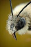 Μικρογράφημα του κεφαλιού μιας μέλισσας Στοκ εικόνες με δικαίωμα ελεύθερης χρήσης