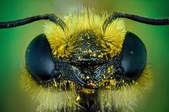 Μικρογράφημα του κεφαλιού μιας μέλισσας Στοκ φωτογραφίες με δικαίωμα ελεύθερης χρήσης