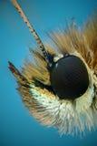 Μικρογράφημα του κεφαλιού μιας πεταλούδας Στοκ Φωτογραφία