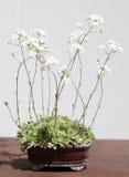 Μικροσκοπικά άσπρα λουλούδια Στοκ φωτογραφία με δικαίωμα ελεύθερης χρήσης