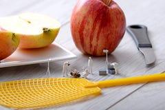 Μικροσκοπικά ειδώλια Οι ανακριτές ομάδας μελετούν μια νεκρή μύγα Στοκ Εικόνες