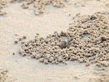 Μικροσκοπικά καβούρια φαντασμάτων που σκάβουν τις τρύπες στην άμμο στοκ εικόνες