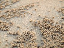 Μικροσκοπικά καβούρια φαντασμάτων που σκάβουν τις τρύπες στην άμμο στοκ φωτογραφία με δικαίωμα ελεύθερης χρήσης