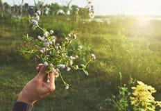 Μικροσκοπικά λουλούδια υπό εξέταση κάτω από το ελαφρύ, θερμό και αναδρομικό ύφος πλαισίων Στοκ φωτογραφίες με δικαίωμα ελεύθερης χρήσης