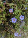 Μικροσκοπικά φίνα μικρά λουλούδια στοκ εικόνες