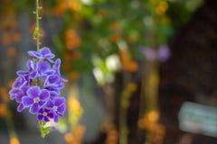 Μικροσκοπικά χαριτωμένα και γοητευτικά λουλούδια που κρεμούν από το δέντρο στο θολωμένο υπόβαθρο στοκ εικόνα