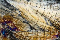 Μικροσκοπικά Xylose κρύσταλλα Στοκ Εικόνες