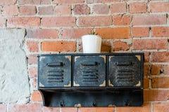 Μικροσκοπικές εγκαταστάσεις στο φλυτζάνι στα μαύρα κουτιά Στοκ εικόνες με δικαίωμα ελεύθερης χρήσης