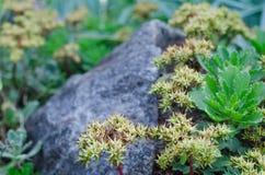Μικροσκοπικές succulent εγκαταστάσεις Στοκ εικόνες με δικαίωμα ελεύθερης χρήσης