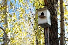 Μικροσκοπική ένωση διακοσμήσεων birdhouse στους κλάδους του δέντρου ιτιών στοκ φωτογραφία