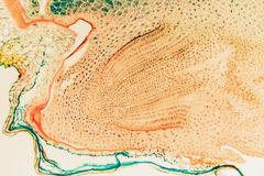 Μικροσκοπική μακρο σίκαλη ρυγχωτών κανθάρων κυττάρων Στοκ φωτογραφία με δικαίωμα ελεύθερης χρήσης