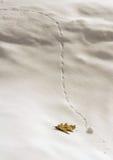 Μικροσκοπική χιονιά και ενιαίο δρύινο φύλλο Στοκ Εικόνα