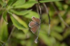 Μικροσκοπική όμορφη πεταλούδα Στοκ φωτογραφία με δικαίωμα ελεύθερης χρήσης