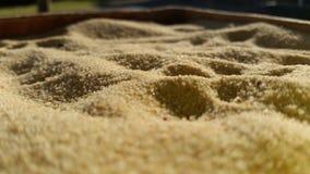 Μικροσκοπικοί κόκκοι της καφετιάς άμμου Στοκ φωτογραφία με δικαίωμα ελεύθερης χρήσης