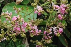 Μικροσκοπικός αυξήθηκε λουλούδια που φυσούν από τους σπόρους στοκ εικόνα