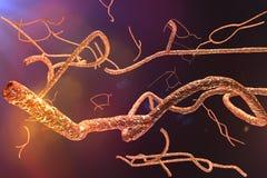 Μικροσκοπικός ιός Ebola διανυσματική απεικόνιση