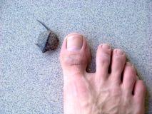 Μικροσκοπικός λίγη χελώνα μωρών που απομονώνεται σε ένα γκρίζο κεραμίδι έναντι ενός toe Στοκ Εικόνα