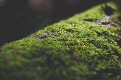 Μικροσκοπικό βρύο στοκ εικόνα με δικαίωμα ελεύθερης χρήσης