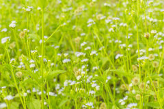 Μικροσκοπικό λιβάδι λουλουδιών ανοίξεων στοκ εικόνα με δικαίωμα ελεύθερης χρήσης