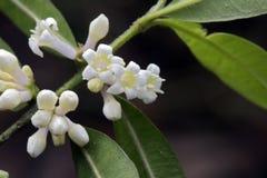 Μικροσκοπικό και καταπληκτικό λουλούδι που καταγράφεται στην παραμονή του τροπικού δάσους Στοκ Εικόνα