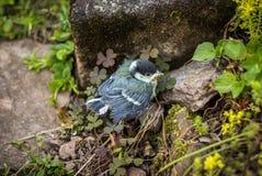 Μικροσκοπικό νέο μεγάλο tit στον κήπο - Σαξωνία, Γερμανία Στοκ φωτογραφίες με δικαίωμα ελεύθερης χρήσης