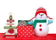 Μικροσκοπικό να οξύνει γατακιών από ένα χριστουγεννιάτικο δώρο με το χιονάνθρωπο στοκ φωτογραφία με δικαίωμα ελεύθερης χρήσης
