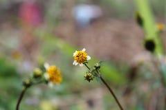 Μικροσκοπικό λουλούδι Στοκ εικόνα με δικαίωμα ελεύθερης χρήσης