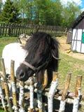 Μικροσκοπικό πάρκο Kaszubski πόνι στοκ φωτογραφίες
