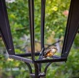 Μικροσκοπικό πουλί σε μια δομή μετάλλων φαναριών Στοκ εικόνα με δικαίωμα ελεύθερης χρήσης