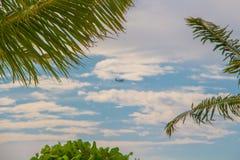 Μικροσκοπικό seaplane ορατό μέσω ενός θόλου των δέντρων καρύδων Στοκ φωτογραφία με δικαίωμα ελεύθερης χρήσης