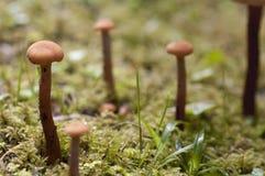 Μικροσκοπικό Toadstools στο ολυμπιακό εθνικό πάρκο στοκ φωτογραφία με δικαίωμα ελεύθερης χρήσης