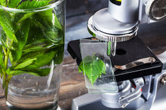Μικροσκόπιο παιδιών ακόμα στα επιτραπέζια φύλλα ζωής, φυτό, φύλλωμα, η βιολογία, μολύβια, σημειωματάριο Στοκ Φωτογραφία