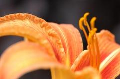 Μικροϋπολογιστής που βλασταίνεται του λουλουδιού στοκ εικόνα με δικαίωμα ελεύθερης χρήσης