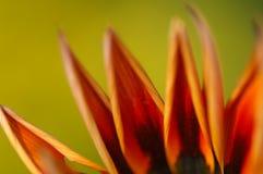 Μικροϋπολογιστής που βλασταίνεται του λουλουδιού στοκ φωτογραφίες με δικαίωμα ελεύθερης χρήσης