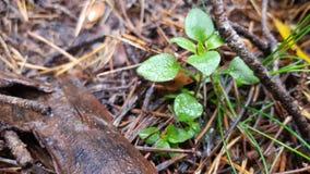 Μικρός βγάζει φύλλα Στοκ φωτογραφία με δικαίωμα ελεύθερης χρήσης