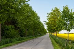 Μικρός δανικός δρόμος στην επαρχία Στοκ Εικόνες