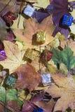 Μικρός διακοσμητικός παρουσιάζει στο υπόβαθρο φύλλων σφενδάμου Στοκ Φωτογραφίες