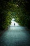 Μικρός είναι σε έναν δασικό ευρύ δρόμο wildlife Σχετικά με τον αριθμό στοκ φωτογραφίες