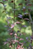 Μικρός θάμνος τριών λεπτός κλαδίσκων με τα φύλλα Στοκ εικόνες με δικαίωμα ελεύθερης χρήσης