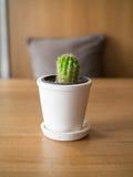 Μικρός κάκτος άσπρο flowerpot στοκ φωτογραφία με δικαίωμα ελεύθερης χρήσης