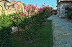 Μικρός κήπος με τις διακοσμητικές εγκαταστάσεις σε Kac monastary, Σερβία Στοκ Εικόνες
