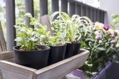 Μικρός κήπος στο μπαλκόνι Στοκ εικόνα με δικαίωμα ελεύθερης χρήσης