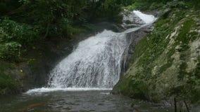 Μικρός καταρράκτης από το ρέοντας ποταμό στο τροπικό δάσος με τον ήχο φιλμ μικρού μήκους