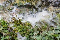 Μικρός καταρράκτης, καταρράκτης που ρέει πέρα από τους mossy λίθους Στοκ Φωτογραφία