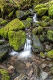 Μικρός καταρράκτης μέσω των mossy βράχων Στοκ Εικόνες
