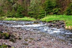 μικρός καταρράκτης Ποταμός βουνών Carpathians Στοκ Φωτογραφία